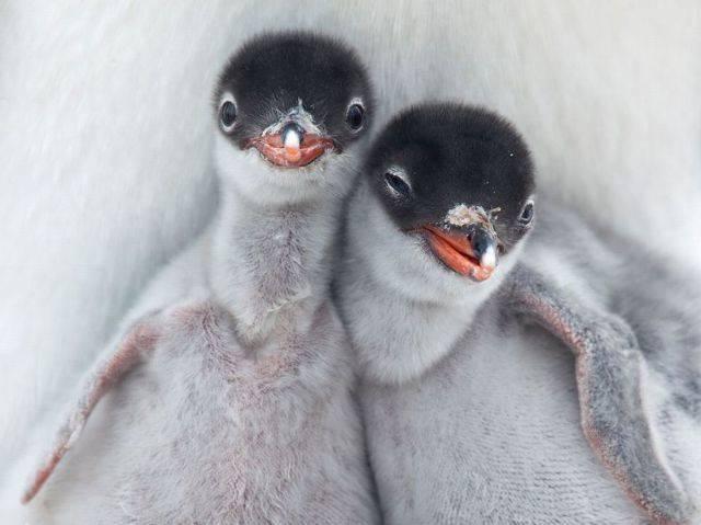 动物存在兄弟:19个在地球上最寒冷,最支持的动物