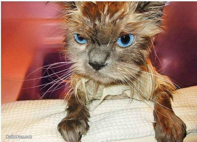 有时候,动物讨厌洗澡……有时,它只是太可爱了