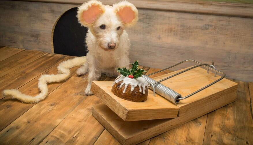 摄影师不断装扮他的圣诞贺卡:狗,是最可爱的