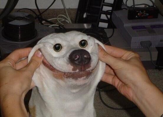 15个smile dog 微笑狗扮相大全