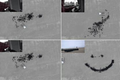 美国农民用无人机航拍自己控制饥饿的牛群摆成巨大的笑脸