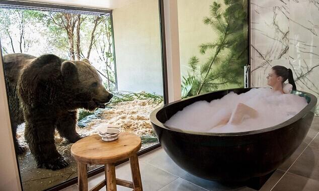 与熊洗澡与狮子吃晚饭:澳大利亚度假胜地兼作动物园