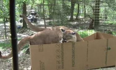 据说猫很喜欢盒子 看看就知道了