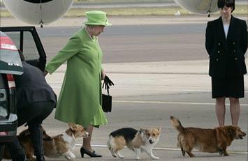 白金汉宫与威尔士矮脚犬80年恋情:英国女王不再养狗,当心被它们绊倒