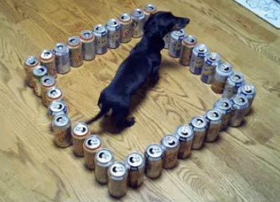 腊肠狗的智力测验