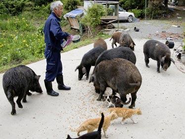 福岛的动物守护者:日本建筑工人回福岛核污染地区照顾留守动物