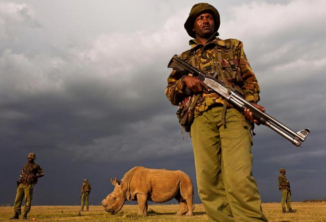 最后一只白犀牛:肯尼亚武装警察守护最后仅存白犀牛