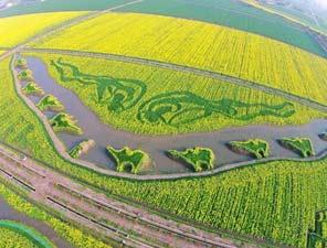 有才华:上海油菜花田种植成大地油画《丝绸之路》
