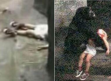 3岁小孩不慎跌入猩猩园区 意想不到的事情发生了