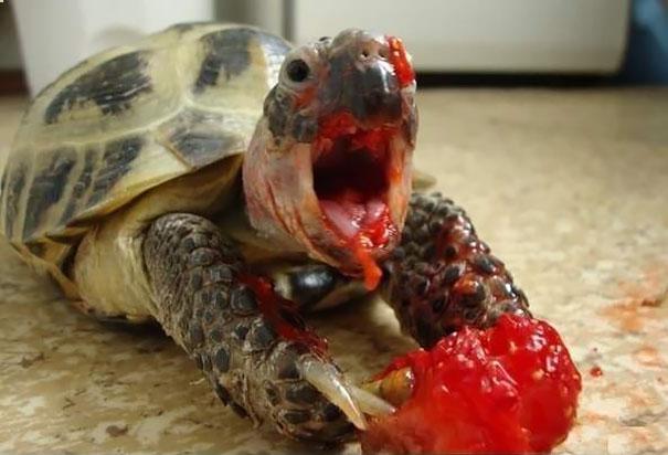 12个动物吃浆果的样子很像恐怖电影中的怪物