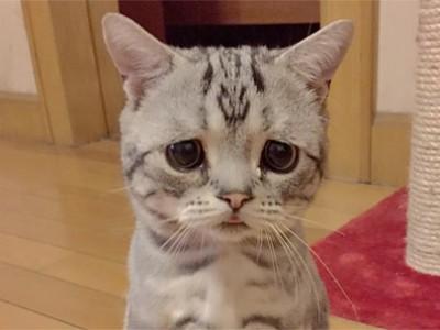 忧郁的小猫因悲伤面孔爆红 小猫来自北京