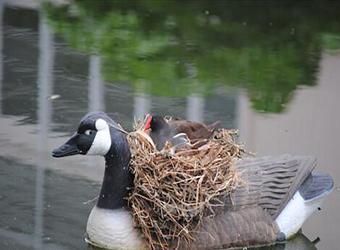 16个你没见过的鸟儿筑巢的地方,不信就来数一数