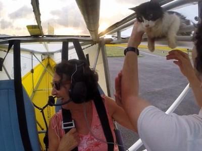 一只猫偷乘飞机 在数千英尺高空的机翼上 吓死喵了!
