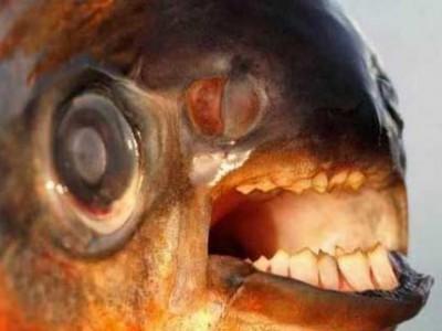 """涉水捕鱼小心这种鱼 专吃男士的""""传家之宝"""""""