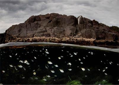 一个平行宇宙:一半水上一半水下风景照片