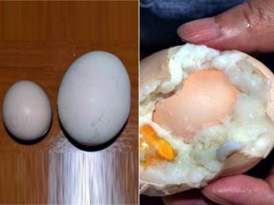 罕见巨型鸡蛋蛋中有蛋 重半斤比鹅蛋还要大
