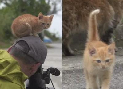 小猫与摄像师交朋友