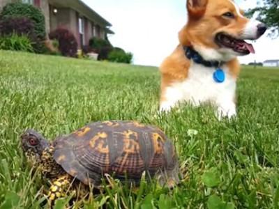 """""""这石头会动!""""这狗被乌龟吓惨了"""