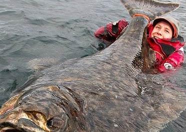 男子钓到204斤比目鱼 水中合影后放生