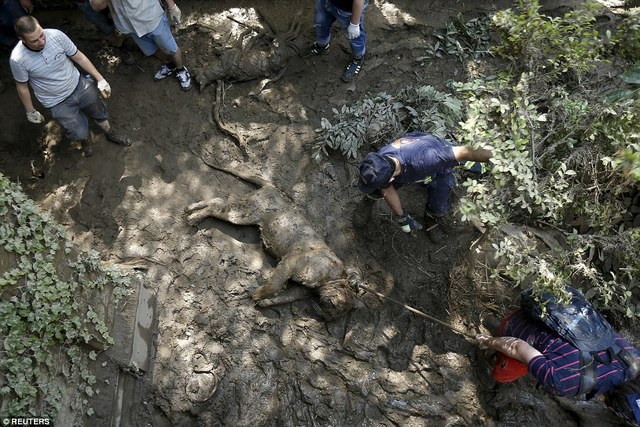 格鲁尼亚动物园被洪水淹没过后