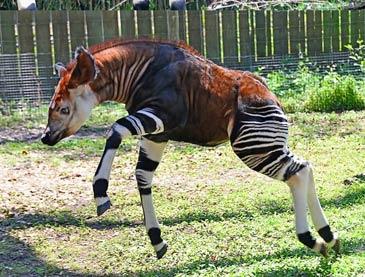 18个动物很可能在你有生之年内灭绝
