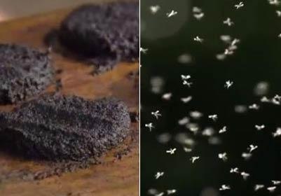 50万只蚊子压成纯天然「蚊子汉堡」黑到极致的暗黑料理!