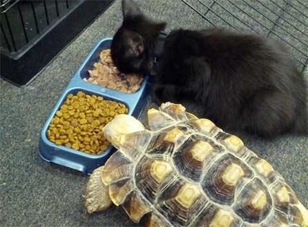 12个动物在开饭时间有着爆笑的表现