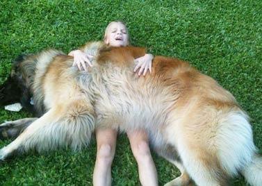 狮子般体型的狗狗 却温柔得让你也想拥有一只