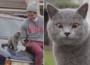 这猫看到了什么 看完这个视频就知道了