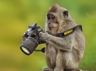 20+可爱动物想成为摄影师