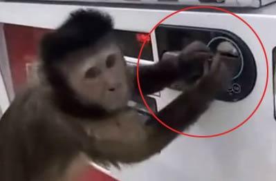 智商又一次被碾压 小猴子渴了在自动贩售机买饮料喝