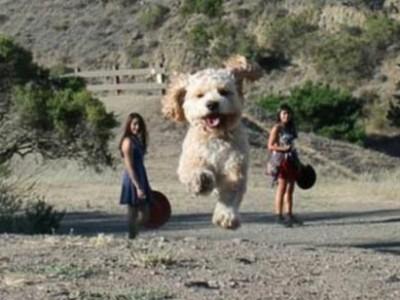 世界上最大的狗狗 源自令人费解的错位照