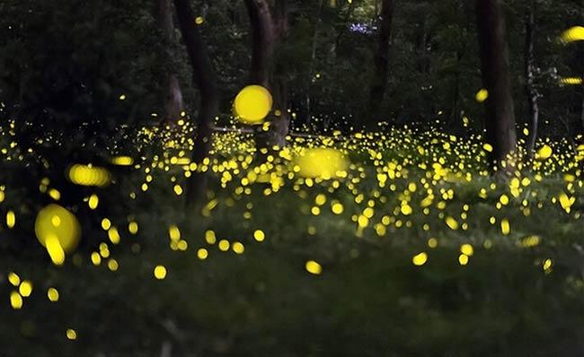 上海首个萤火虫主题公园将开放