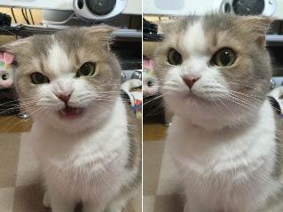 铲屎官又忘记买猫粮回家 喵大王一秒就怒了!