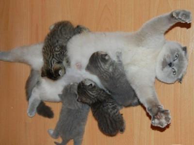 这只猫很享受当妈妈的感觉