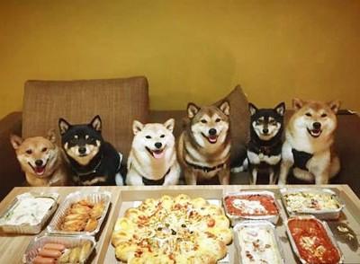 柴犬们的幸福生活