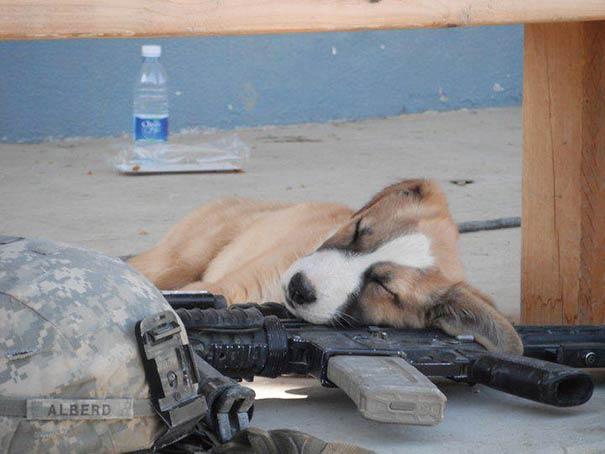 25只小狗 可以随时随地睡觉-puppy-27__605
