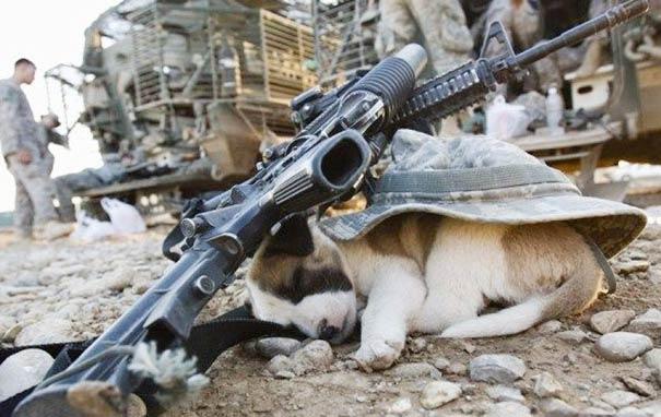 25只小狗 可以随时随地睡觉-puppy-28__605