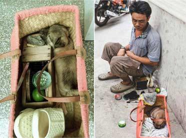 越南无家可归擦鞋者和他的小盲人朋友