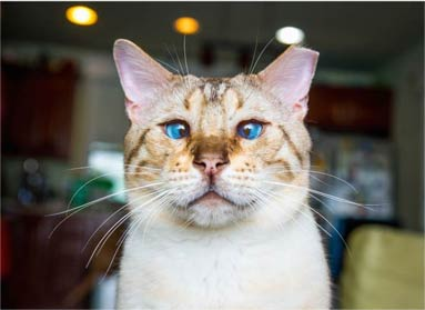 猫不感冒 它们有情绪 就像你