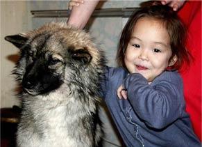 没有这只狗狗 5岁小女孩不可能在西伯利亚森林存活
