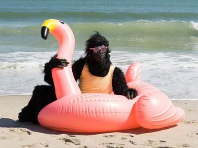 简单前卫的大猩猩 用电影展示他的旅行和日常事务