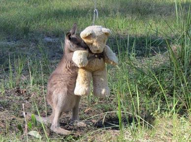 孤立的袋鼠宝宝童年需要一个玩伴