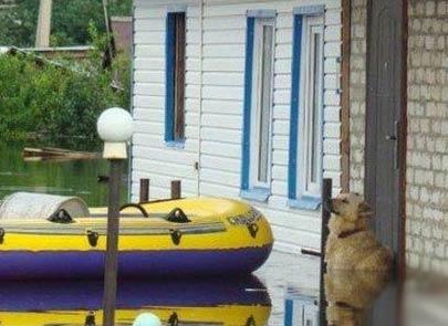 忠犬死守被洪水淹没的家园 不离不弃感动世界