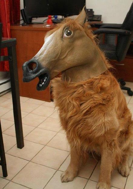 马头套|二货主人给狗狗带上头套之后……整个画风都变了