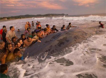 3万公斤重的鲸鱼搁浅 民众齐心推回较深的水域