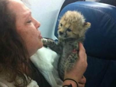 坐飞机时 可能会遇到这些奇怪的乘客们