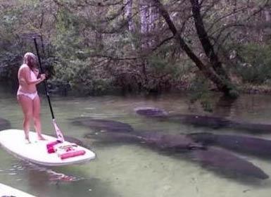 男子和女友在水上划船 忽然水下游过几个黑影