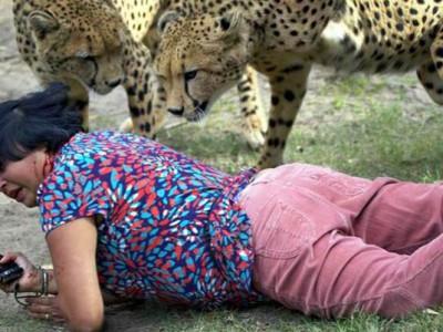 女子正与猎豹开心合影 一言不合就遭猎豹扑倒