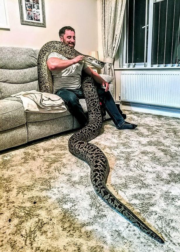 英国男子养5.5米长缅甸蟒蛇当宠物  呼吁捐献兔子喂蛇